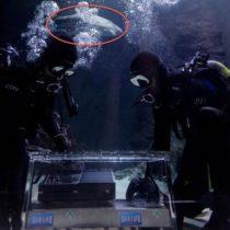 La première Xbox One vendue le 22 Novembre est gardée par des requins en Nouvelle-Zélande